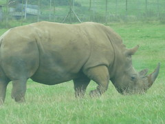 """Longleat Safari Park • <a style=""""font-size:0.8em;"""" href=""""http://www.flickr.com/photos/81195048@N05/8017725964/"""" target=""""_blank"""">View on Flickr</a>"""