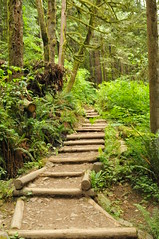 Wallace Falls Trail (HockeyholicAZ) Tags: wood green stairs outdoors climb moss goal rainforest exercise path logs hike creepy spooky trail cedar verdant ferns uphill prehistoric sustainable wallacefalls erosioncontrol youcandoit