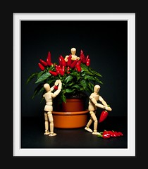 The Chilli thieves.... (El Tel63..) Tags: plant chilli thieves manikin theives mamikin terrybaldock