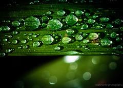 bejewelled... {Explored! 6th October 2012 Highest #10} (markhortonphotography) Tags: macro water rain canon drops dof bokeh drop surrey 100mm 7d droplet crocosmia vignette f28 deepcut surreyheath eos7d