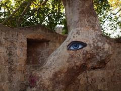 Trees Have Eyes Too - EXPLORED (Axiraa) Tags: tree eye wall island greek europe aegean greece sycamore rodos rhodes rhodos dodecanese explored rodhos  vanagram dodeknisa plaatan