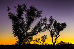 IMG_6620-Bearbeitet (Johannes Hillerbrand) Tags: gumtree cloud sunset magenta yellow karijini karijininationalpark wa scenic travel landscape canon 6d 24105mm gitzo westernaustralia australia karijiniecoretreat sillouette backlight backlit australien au