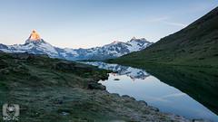 Stellisee (MD-Pic) Tags: matterhorn dent blanche wellenkuppe ober gabelhorn zermatt schweiz swiss switzerland stellisee sunrise sonnenaufgang alpen alps alpenglhen wallis see lake berge mountains sommer landschaft landscape d7100 nikon
