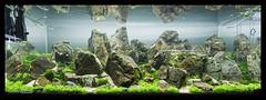 Green Aqua Showroom (viktorlantos) Tags: aquascaping aquascape adahungary aquariumplants aquarium aquascapingshopbudapest aquadesignamano plantedaquarium plantedtank plantedaquariumgallery greenaquagallery greenaquahungary nvnyesakvrium hardscape frodostone underwaterlandscape underwaterworld