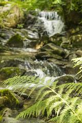 Bracken and stream (G. Warrink) Tags: england lakedistrict cumbria uk unitedkingdom stream water bracken fern nature grasmere rydal