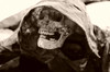 IMGP6360.jpg (Dean Hamilton) Tags: iceland witchcraft