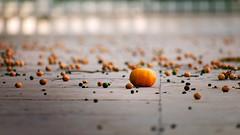 Unterwegs in 13 (s-h-design) Tags: valencia mandarine tangerines detail ground conrete tree little orange grey city citrus fruits backyard