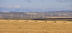 Harvest time in the foothills (edk7) Tags: nikond300 nikonnikkor18200mm13556gedifafsvrdx edk7 2008 canada alberta municipaldistrictofwillowcreek crowsnesthighway westoffortmacleod prairie foothills farm field sky cloud ranch crop harvest landscape vista hill mountain windturbine turbine windmill