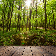 forest trees. (lisame0511) Tags: natural nature background tree wood floor green home forest wooden white path beam retro indoor pattern sunlight shine ray sun text building table park parquet brown light plank season tabl wall panel frame texture desk architecture art board single textured leaves foliage blank fence interior empty picture trunk yard leafy ukraine