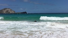IMG_2326 (jjandames) Tags: makapuubeach hawaii oahu 2016