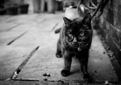 2016_256 (Chilanga Cement) Tags: fuji fujix100t x100t xseries bw blackandwhite cat blackcat bokeh lady yard