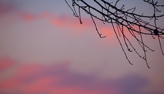 Sunset 20141009 (caligula1995) Tags: 2014 clouds plumtree sunset
