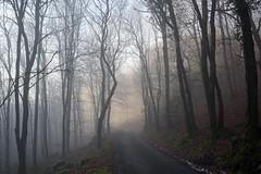 Misty near Trefriw, N Wales (Bon Espoir Photography) Tags: mist misty trees winter road trefriw northwales landscape light branches nikond750