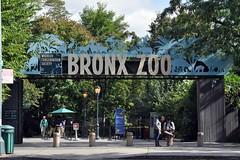 Bronx Zoo (markusOulehla) Tags: bronxzoo nyc newyorkcity markusoulehla nikond90 citytrip thebigapple usa