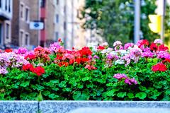 _DSF8546 (ad_n61) Tags: fujifilm xt1 fujinon super ebc xf 18135mm 13556 ois wr zapato rojo red gente calle zaragoza spain espaa flor flower flores flowers