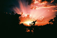 outlines (fotobes) Tags: silhouette silhouettes outlines black sunset sun sunrays sunlight sky clouds fujivelvia100 xpro crossprocess crossprocessed lca colours spain plants leaves bush bokeh depthoffield vignetting
