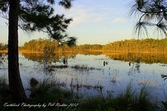 TOMORROW IS ...ANOTHER DAY... -WETLANDS - GRASSY WATERS - IMG_0399 (Earthlink Photography by P. Richter) Tags: swamp wetlands cypress grassywaters androsisleswestpalmbeachfl