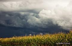 The storm (Enny Napolitano) Tags: storm bad weather cattivo tempo rain pioggia granoturco sky cielo nuvole clouds