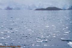 IMG_6343.jpg (MonkeySeeMonkeySnap) Tags: old blue cold ice nature water alaska boat ancient ak glacier seward aialik
