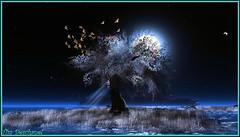Envol dans la nuit bleutée (Tim Deschanel) Tags: life moon tree bird lune landscape tim sl second wendy paysage exploration arbre oiseau humanoid deschanel xeno gilmour