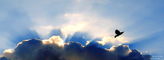 Silver lining (Sameer0406) Tags: blue sunset shadow sky cloud sun sunlight white bird topf25 beautiful sunshine birds clouds sunrise dark pretty shadows great creative best l topv777 top100 top10 topv50 top50 flickr5 flickraward