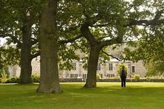 À Falkland Palace, Fife, Écosse, 27 août 2011 (Stéphane Bily) Tags: portrait scotland oak fife écosse falklandpalace chânes stéphanebily