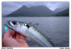 scenic mackerel (Nicolas Valentin) Tags: light sea sky mountain lake fish landscape mackerel freedom scotland fishing scenery kayak scenic passion loch leven lochleven kayakfishing kayakscotland