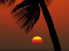Por do Sol em Cartagena - Colombia (Jakza) Tags: cartagena coqueiro pordosol nanaturezainnature tufototureto x3