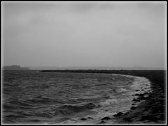 Windy day on the beach (Landanna) Tags: bw white black beach denmark zwart wit danmark als denemarken zw snderjylland lnsmaj