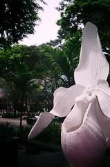 Raffles (nuo2x2toycam) Tags: road street art statue singapore m1 superia orchard exhibition sidewalk 200 fujica takashimaya raffles toycam rafflesia ma1 arnoldii nuo2x2 nuo2x2toycam