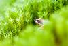 _MG_0502 (Den Boma Files) Tags: fauna dieren kikker amfibieen stropersbos