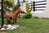 Burrinho (Adriano Matos) Tags: donkey burro jumento burrinho