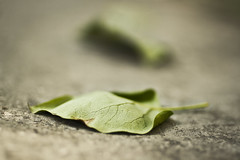 Lost dreams (Liliya Rakshieva) Tags: macro green closeup leaf fallen tender tenderness fibers selectivefocus losthope lostdreams