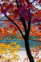 yellow, orange & red (jimmy_racoon) Tags: autumn west tree fall minnesota silhouette river mississippi is fallcolors 127 parkway usm 70200 f4 246 westriverparkway explored 70200f4isusm canonxsi