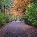 L'automne au parc du Bois-de-Coulonge