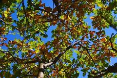 Tree (Natali P) Tags: tree macedonia kokino