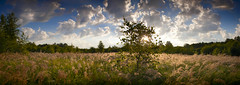 07:23,  Shallow depth of field bokeh landscape panorama sunrise in the field, with a tree in the sun (czdistagon.com) Tags: panorama sun tree field zeiss sunrise landscape with bokeh shallow depth distagon carlzzeiss czdistagon czdistagoncom