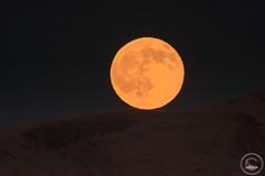 Buck Moon 2016 (www.35mmNegative.com(On a Break, Catchin) Tags: 1200mm area astrophotography buck buckmoon california fremont hazarika landscape moon moonrise moonset nikon reetom sfbay superzoom telephoto www35mmnegativecom astrometrydotnet:id=nova1651210 astrometrydotnet:status=failed
