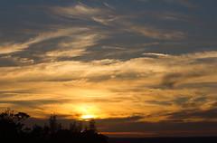 Silhouettes (ArtGordon1) Tags: august summer 2016 london england uk walthamstow sunset sunrays sun evening davegordon davidgordon daveartgordon davidagordon daveagordon artgordon1 nature weather sky skies