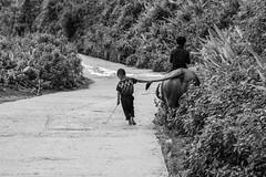 Children shepherds (MicheleSana) Tags: vietnam children shepherds black white lo chai spa walking shots trip trekking escursioni bambini pastori camminate north nord strada risaie rise field nikon d3100 summer estate agosto august