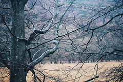 (louise vance) Tags: erigmore perthshire birnam dunkeld trees scotland nature
