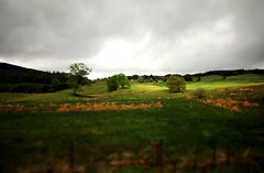 Trees In The Light (Glenda Hall) Tags: inverary scotland scotlandlandscape fields green sunlight trees landscape tiltshift vignette gimp throughthewindow bustours highlandheritage uk colour may 2016 holiday grassland canon60d canon canonwideanglelens 1018mm 10mm cloud sky field fence gate blur glenda glendahall canon1018mm