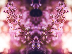 Floral Deer (thethomsn) Tags: floral deer pink rose flowers nature geometric art deerhead horns artwork thethomsn bokeh depthoffield triangle beautyinnature 30mm symmetry