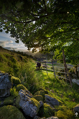 Photographer At Work (fearghal breathnach) Tags: theboatyardgallery loughdan wicklow wicklowmountains goldenhour sunset oldgate photographer light landscape 5d canoneos5dmarkiii ef1635mmf4lisusm wideangle ultrawide portrait framing trees flare sun tones
