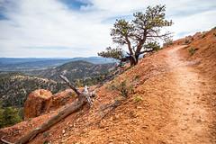 Along the Hat Shop Trail (Serendigity) Tags: brycecanyonnationalpark trail outdoors usa unitedstates landscape utah nature