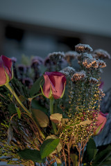 Late Night Tales (rickyjfjones) Tags: flowers wildflowers candlelit green bokah
