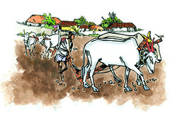 agriculture cover (Thisisanwar) Tags: anwar artist cartoonist illustrator india hyderabad nandyal noonepalli telugucartoonist teluguillustrator telugubomma bapu bali chandra gopi mohan sketchingartist linedrawing sketchbook howtodraw