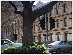 Corner of King and Little Collins Streets, Melbourne CBD. (fotograf1v2) Tags: cornerwilliamcollinsstreets melbourne victoria australia statecapital tree streettrees cars traffic city streetscape reflectedlight ivy trafficlights earlyspring