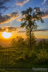 Sunset (Rom4rio Photography) Tags: nikon d3100 natura nature nuvole nori nikkor sky color sunset sun allaperto tramonto sole albero tree copac campo verde erba grass iarba clouds cielo nuvola apusdesoare outdoor soare nikond3100 amatore