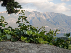 #125 Flora @Lake Garda (timmey1985) Tags: lake garda gardasee italien italy green grn pflanze plants mountains berge